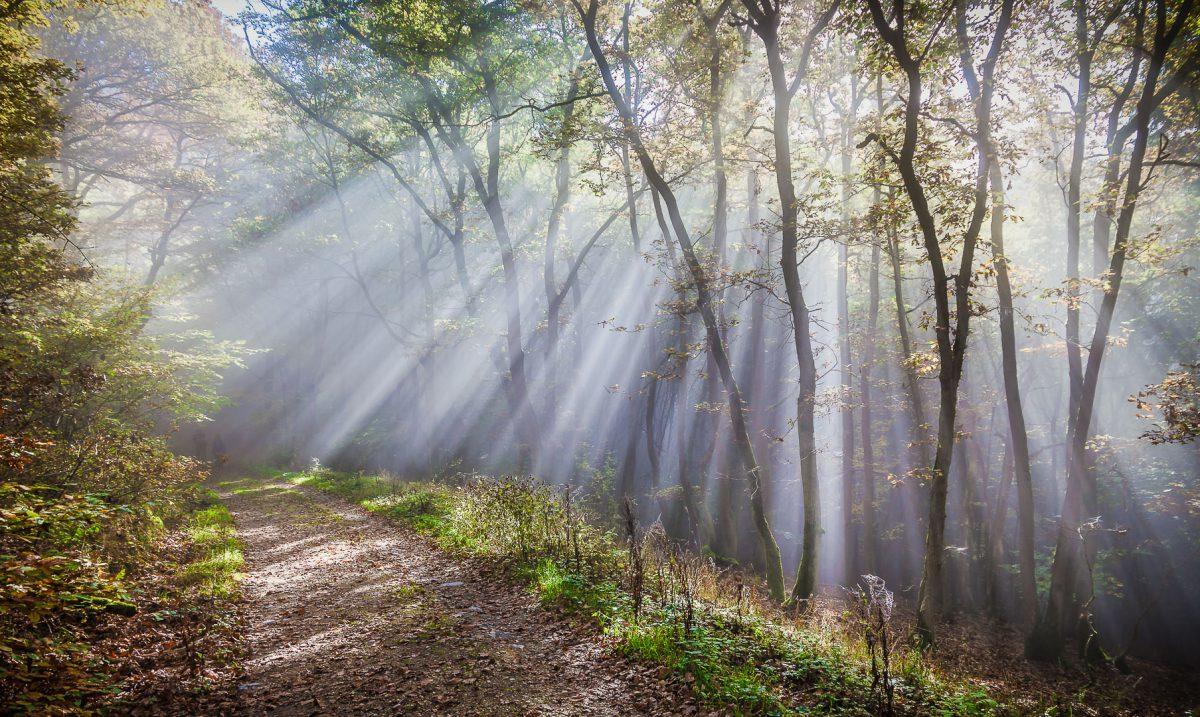 Sonnenstrahlen im Wald - (c) eric immerheiser