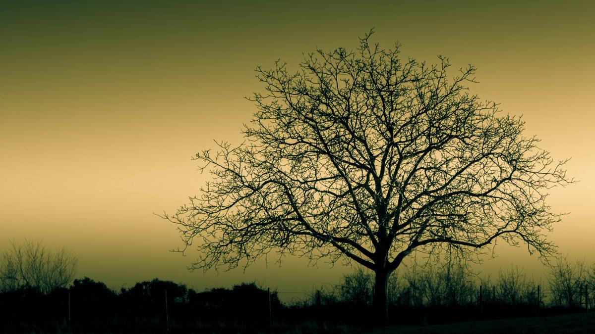 Baum im Winter - (c) eric immerheiser